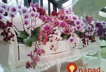 dom zahrada kvety