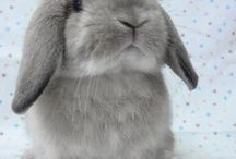 Rabbits / I want a rabbit