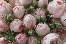 pour l'amour des fleurs / by Erin Bourassa