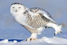 OWLS sowy :)