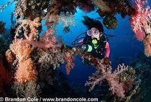 Coral Reef Backpiece