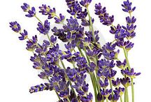 Lavender lovin' / Projects with/for Lavender / by Michelle Mills