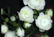 Flowers / by Sabrina Johnson