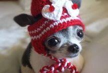 valpar puppy cute sötaste