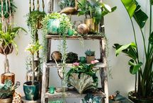 観葉植物、ディスプレイ