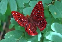 Butterfly / by Debarshi Dhar