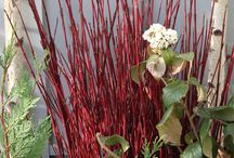 Seasonal Decorative Branches / Seasonal Decorative Branches available at Nettleton Hollow... when in season. The Curly Willow Branches and the Dogwood Branches are great for decorating dormant container gardens, urns and garden pots during the winter.