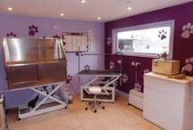Grooming Salons
