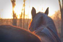 Equine Photography ❤