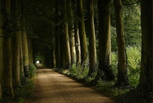 The Enchanted Forest / by Emma Jones