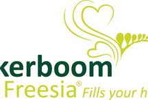 G-Fresh grower Akerboom Freesia / Akerboom Freesia BV is a company with the words 'innovation' and 'quality' as a red line through the company. At this moment we are cultivating around 25 varieties, containing some single- and double flowered freesias. For more information: www.akerboomfreesia.nl