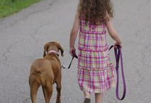 Dog Training tips (from my husband--of course) / All from my husband of DogBehaviorOnline.com