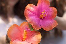 оранжевые  с фиолетовым