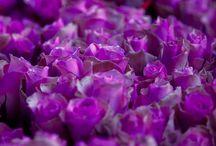Purple Flowers / Purple flowers!