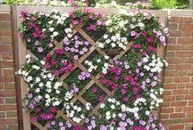 lattice garden wall