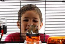 Hamster & Co. / Hier findet ihr Interessantes, Wissenswertes oder Witziges rund ums Thema Hamster.