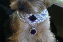 dog bling for royalty