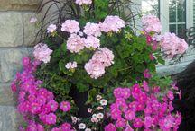 pots arrangement