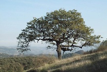 Daley Ranch / Daley Ranch Escondido California    http://www.escondido.org/daley-ranch.aspx
