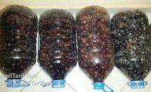Siyah zeytin nasıl yapilr