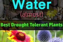 Plants - little water