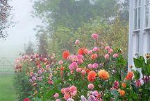 Min drömträdgård