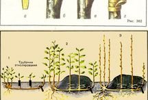 Altoirea pomilor
