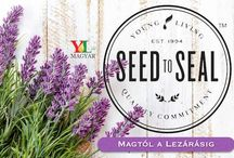 Young Living Company