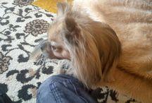 Umrel babkin pes Skubi / Pes sa dožil 4,5 rokov. :(