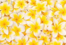 Yellow fowers