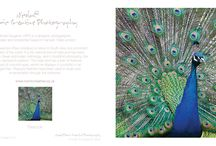 Birds / Photographic cards of birds