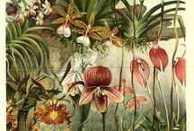 Vintage botanics