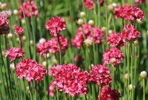 Garden Blooms & Plants