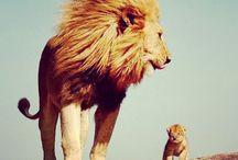 animais maravilhosos