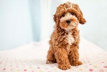 pups  / by Maddie Hornok