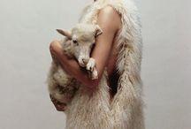 wool / shoot