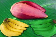 Banana Flower Diabetes treatment options