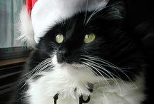 XMAS CELEBRATIONS. WITH OUR PETS.