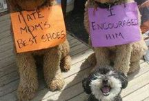 Pet Shaming at its Finest