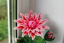 Korálové květiny