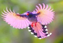 Beautiful birds / Birds of all types and colors.