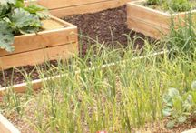 Garden box / How to design garden boxes