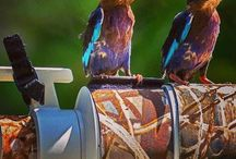 Common Kingfishers perched on a Camera  lens…. #HeathrowGatwickCars.com