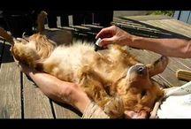 dog fleas n ticks remedys