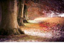 beauty inside the woods
