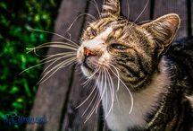 Kedilerin Günlüğü