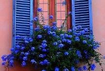 ❤️ WINDOW BOX