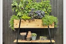 Indoor/Outdoor Garden