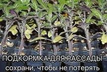 огород