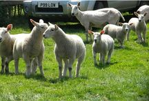 Staffordshire animals and wildlife / by Staffordshire Newsletter